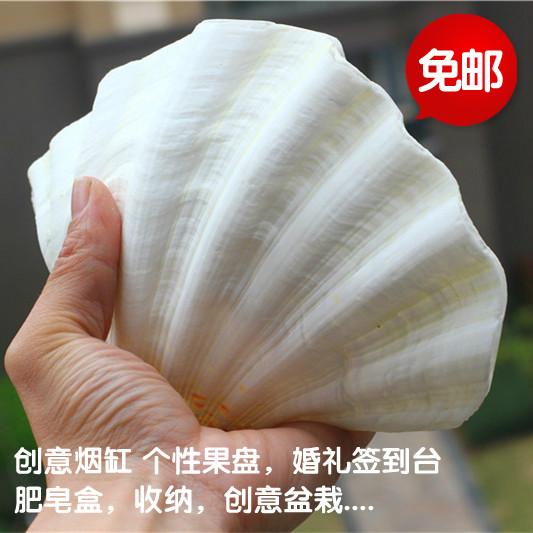 du store conch skaller skaldyr skaldyr hjem boligtekstiler par lotus kreative retter askebæger potteplante frugt