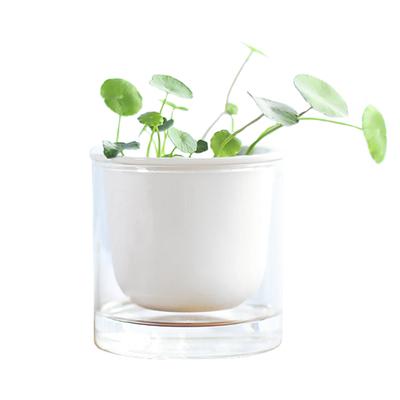 铜钱草多肉植物水培绿植花盆小双层桌面陶瓷玻璃透明北欧简约白色