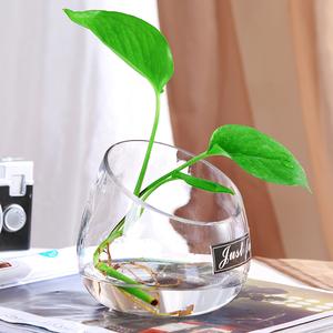 简约欧式透明玻璃花瓶水培绿萝花盆鱼缸水养植物客厅摆件插花器皿