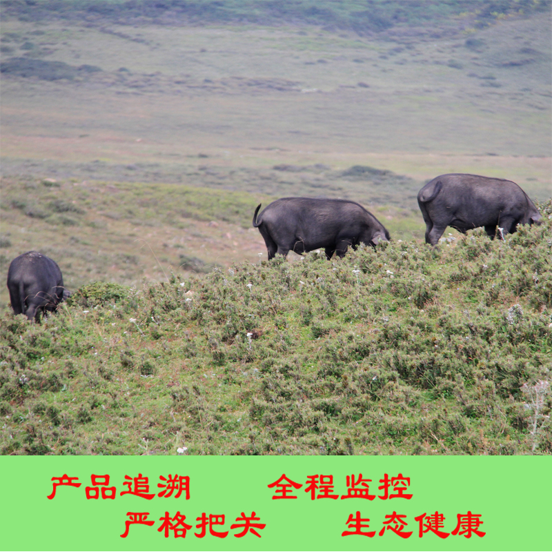 Excellent polar Sichuan specialty Liangshan Butuo Wujin pig bone stick /500g black pig pig meat and fresh soil