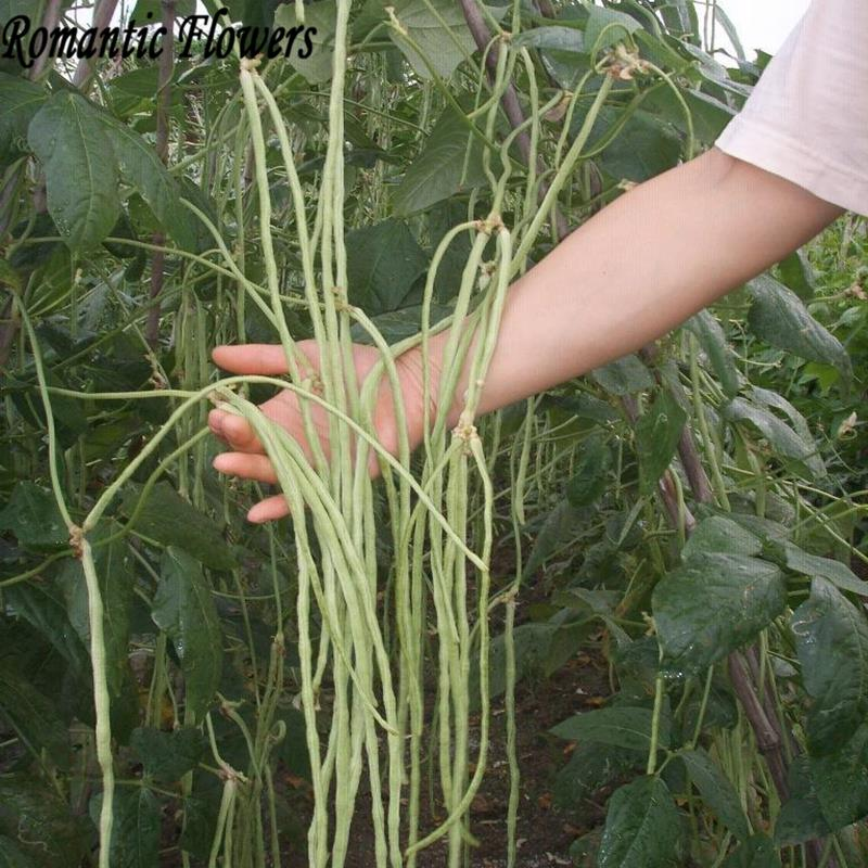 delicious Vegetable Cowpea Seed In Spring And Autumn Bean Se