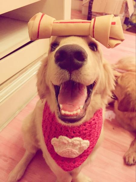 奥莉 الذهبي SmartBones أمريكا الحيوانات الأليفة وجبات خفيفة صغيرة أو متوسطة أو كبيرة الحجم معجون تيدي 萨摩狗 يمضغ العظام