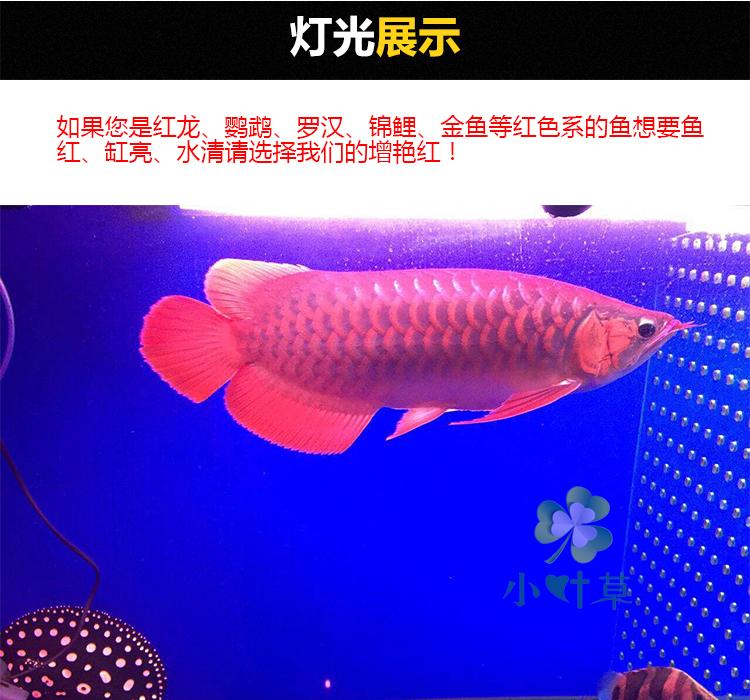 Impermeável led lâmpada de Luz do aquário aquário plantas aquáticas mergulho papagaio cor tricolor lâmpada especial Dragon Red Arowana
