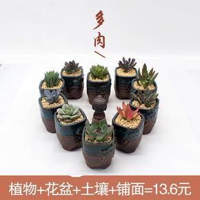包邮 高档含盆含土多肉植物组合盆栽 精品办公室桌面多肉植物盆栽