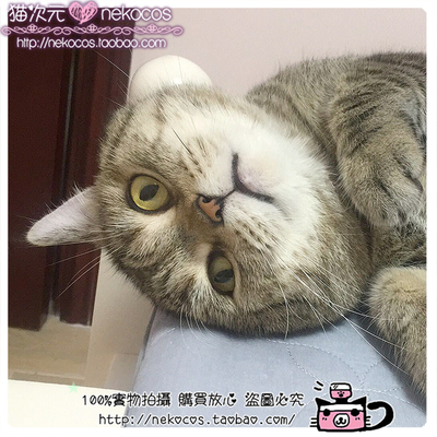 taobao agent Cat dimension【Customized】Mass customization of professional commercial cosplay costumes, props and shoes