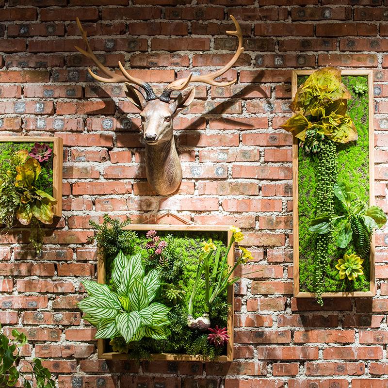多肉植物组合背景墙-多肉花盆网
