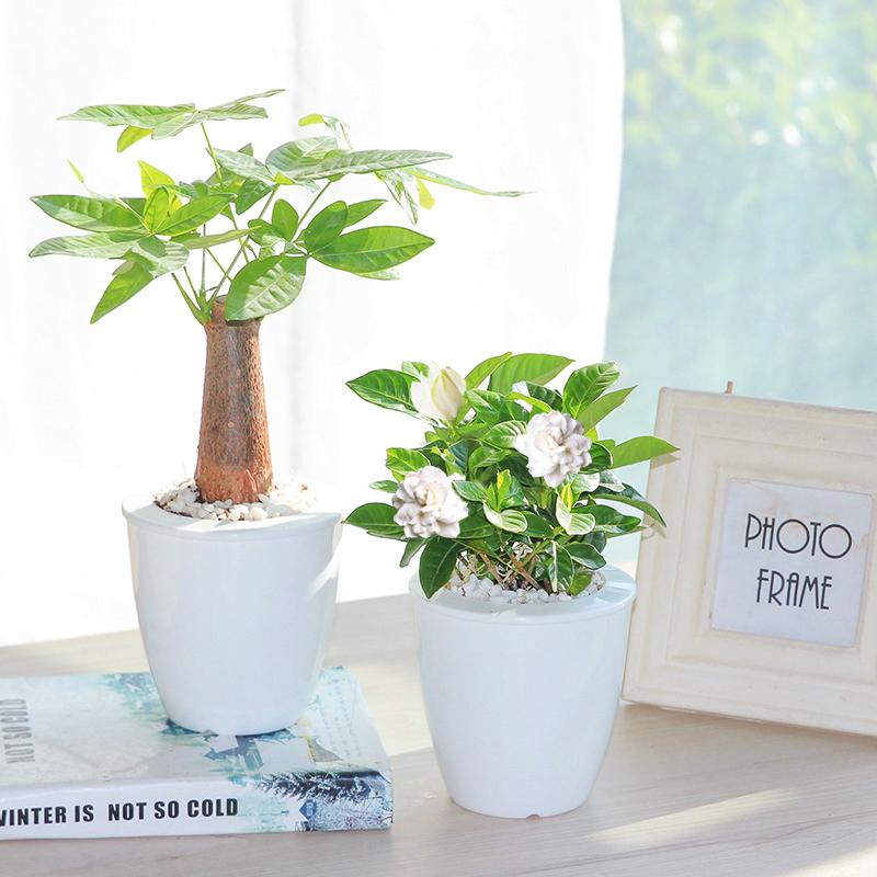 【懒人园艺】室内植物花卉盆栽