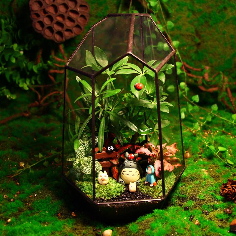 苔藓植物微景观生态瓶,送你整个世界的生日礼物