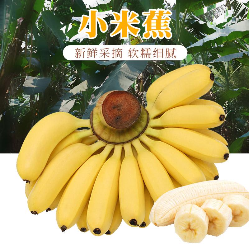 【北香】广西特产小米蕉无添...