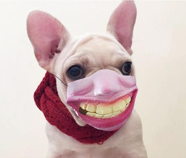 笑死我了!抖音同款戴着人脸的狗嘴套
